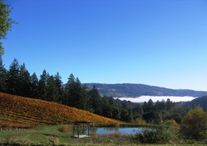 A low cloud bank in the valley, hillsides of autumn colored grapevines, fall is in the air!